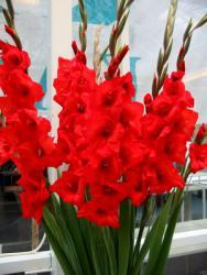 Flores Marín - Productores de flor natural